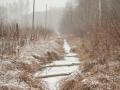 Liniņu mežs