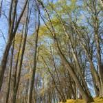 Ambeļu parks
